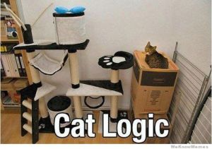 cat-logic-meme