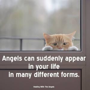 angelscan