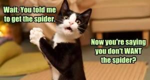 wait-spider