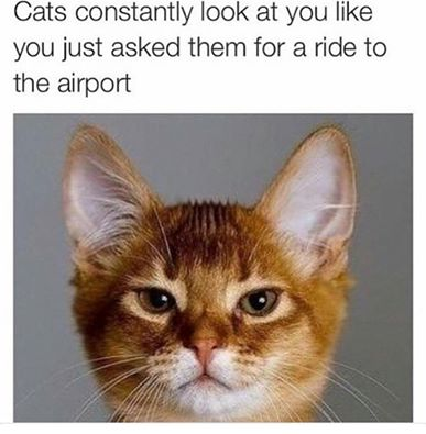 cats-look