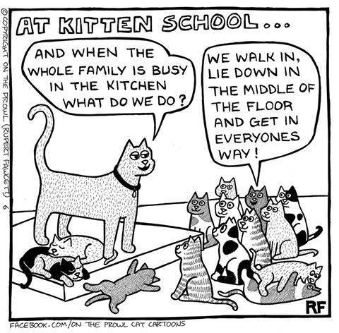 kittenschool